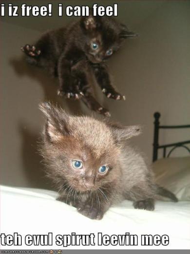 funny-pictures-evil-spirit-leaves-tiny-kitten